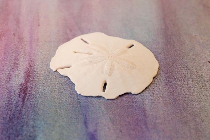 sand dollar on painted background