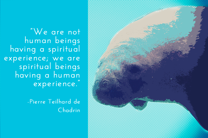 image of a manatee with a quote overlayed