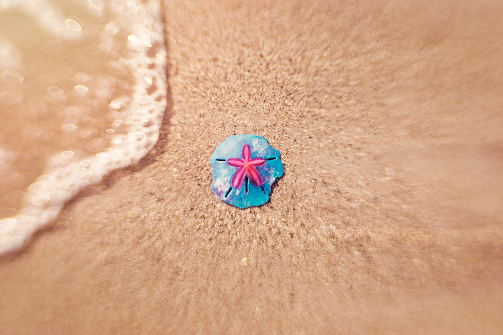 painted sand dollar at the water's edge