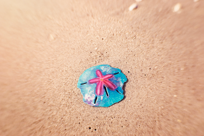 painted sand dollar on the beach